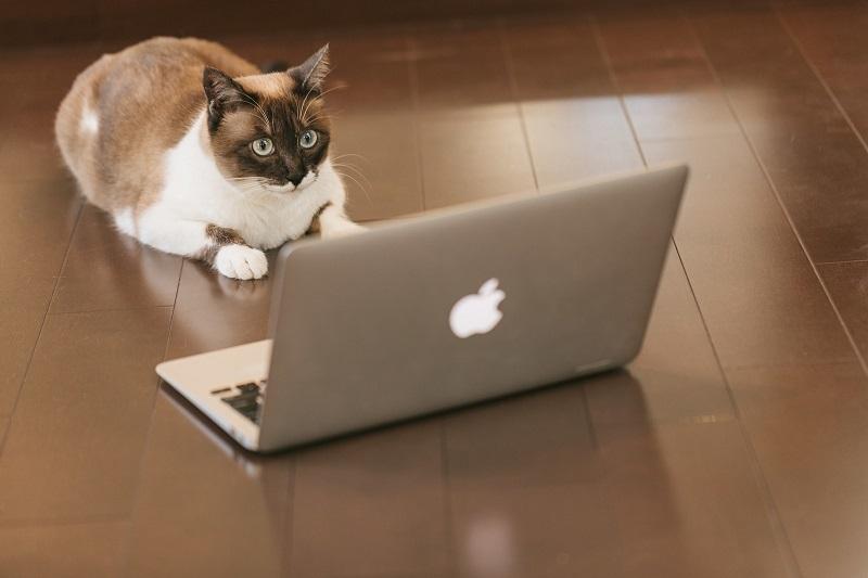 ノートパソコンを眺める猫